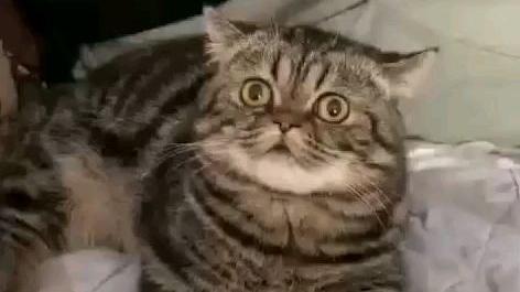 猫:啊!这突如其来的舒适感到底是怎么一回事?