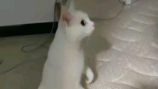 震惊猫咪竟然看见了那种东西