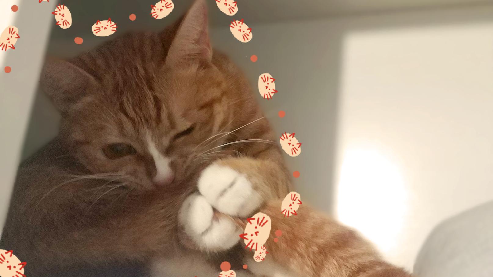 猫咪日常热舞