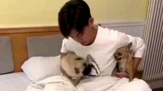俩狗子吵架,精彩!