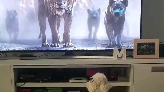 狗子:我当时真的是害怕极了!