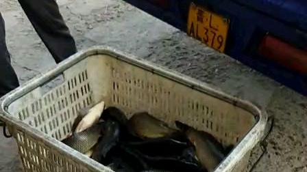 新鲜的鱼,活蹦乱跳的