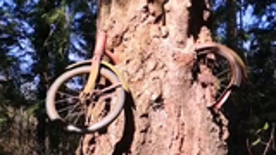 男孩,单车,树