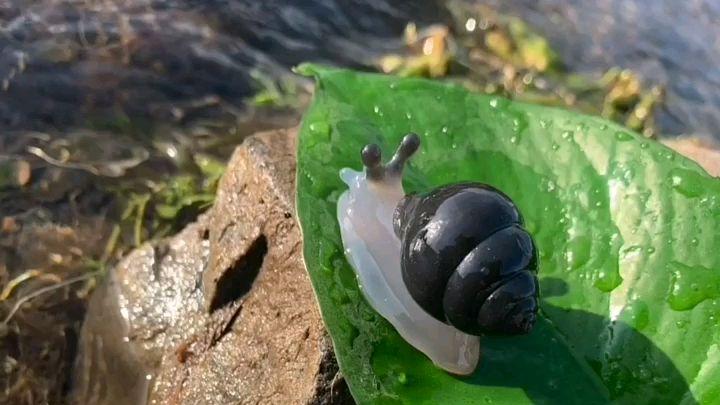 河边捡啦一块玉石,雕刻成的小蜗牛,看看喜欢吗