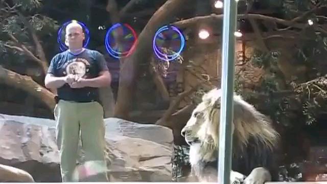 狮子攻击饲养员