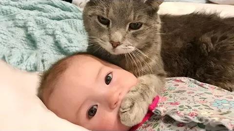 [萌宠]可爱萌宠和婴儿玩耍的有趣合集#1