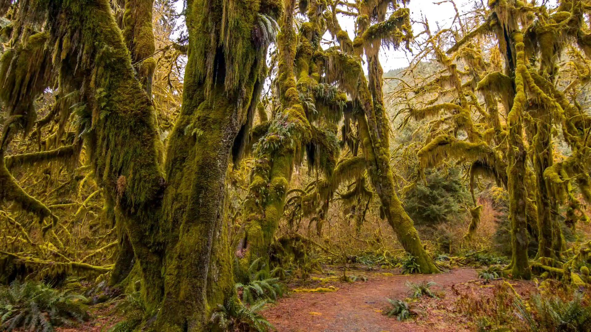 热带雨林中漫步一小时