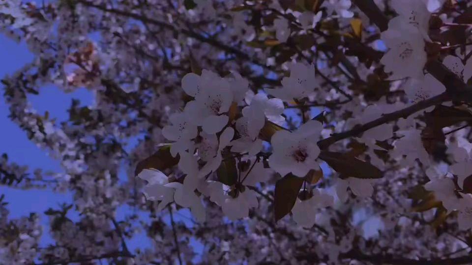 春天真的好棒!!!