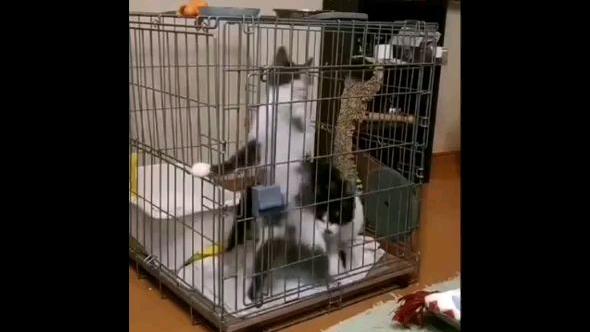 【转载】猫咪永动机