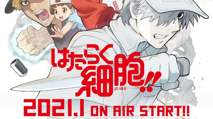 TV动画《工作细胞》第2季第1弹PV公开!2021年1月放送开始!