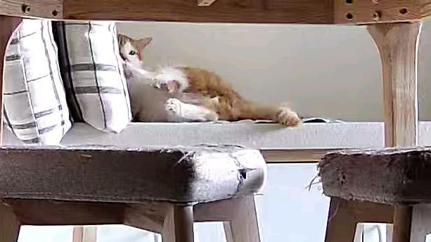 一只猫能多怂?怂到怕凉垫
