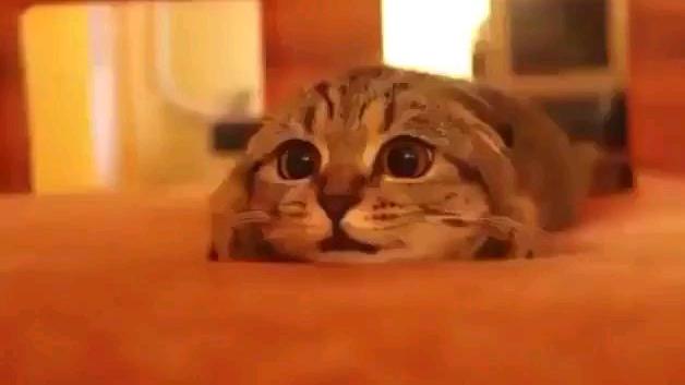 正在看恐怖片的猫