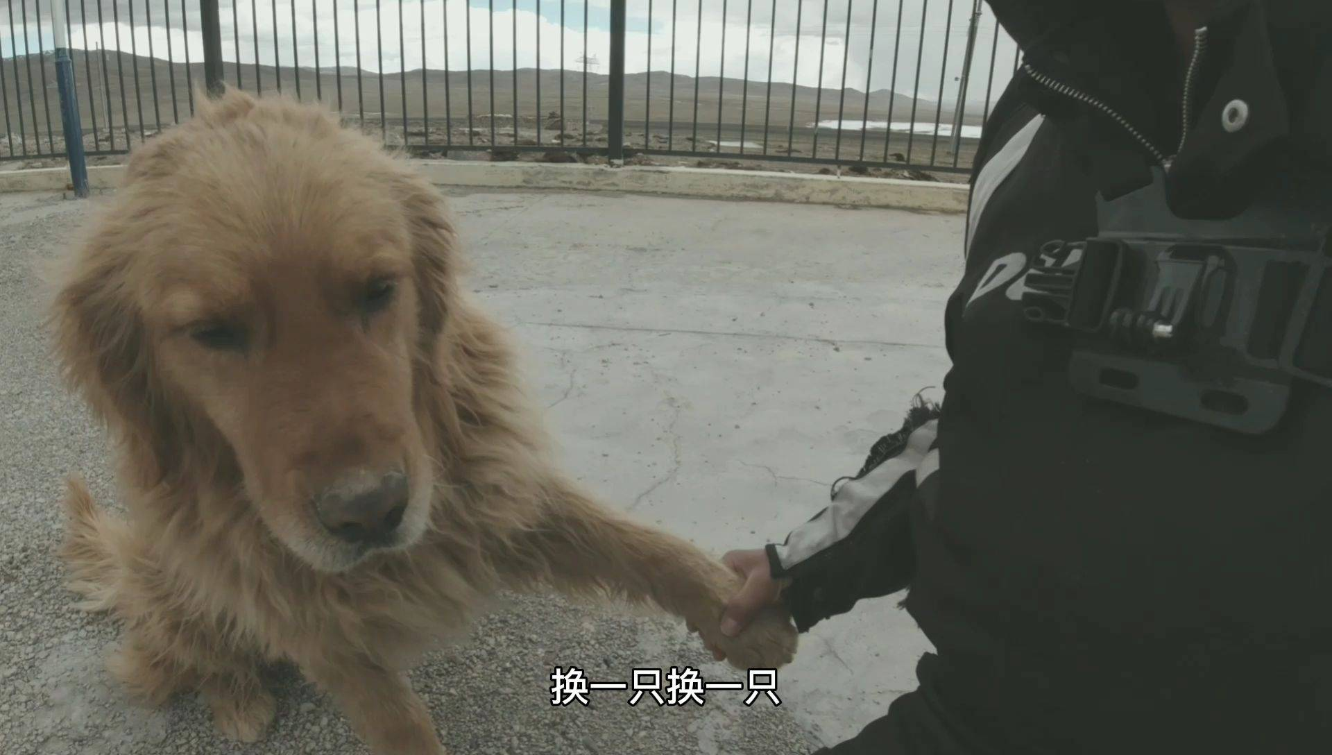 青藏线遇到两个徒步拉车的,带了两条狗,这就是徒步拉车标配?