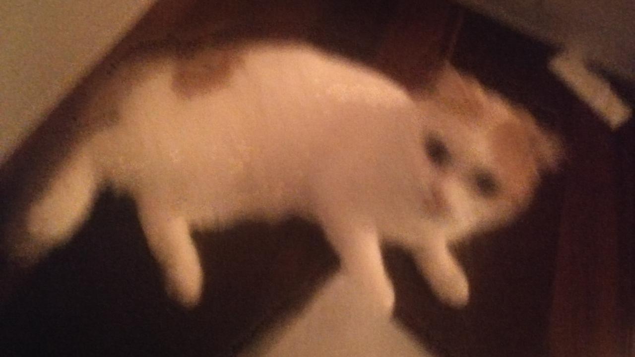 萌宠up更新了,极限画质下用猫来水视频