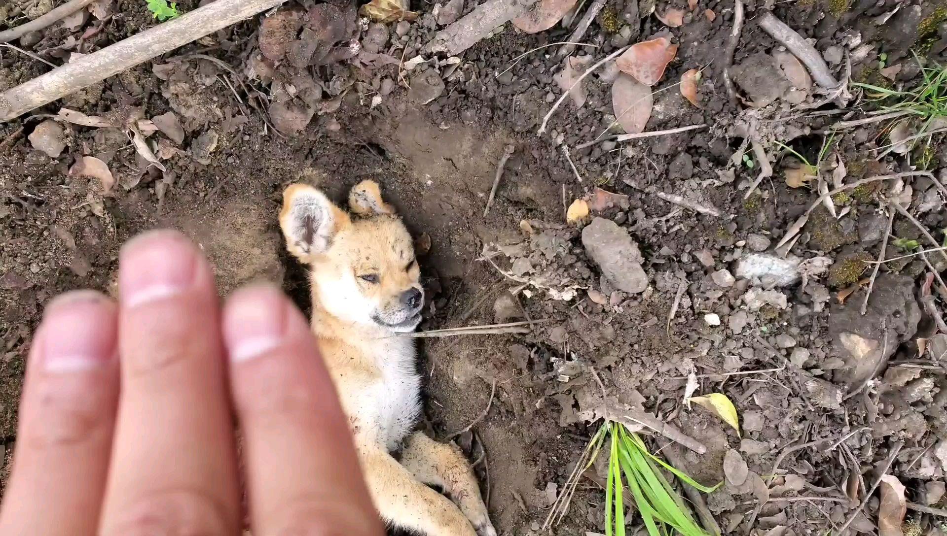 西藏318国道边发现个被撞死的动物,不知道是狗还是啥