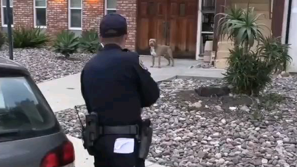 [执法记录] 逮捕夺命比特犬