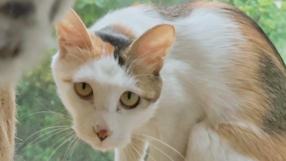 【老板家的猫】四只猫的沙雕日常