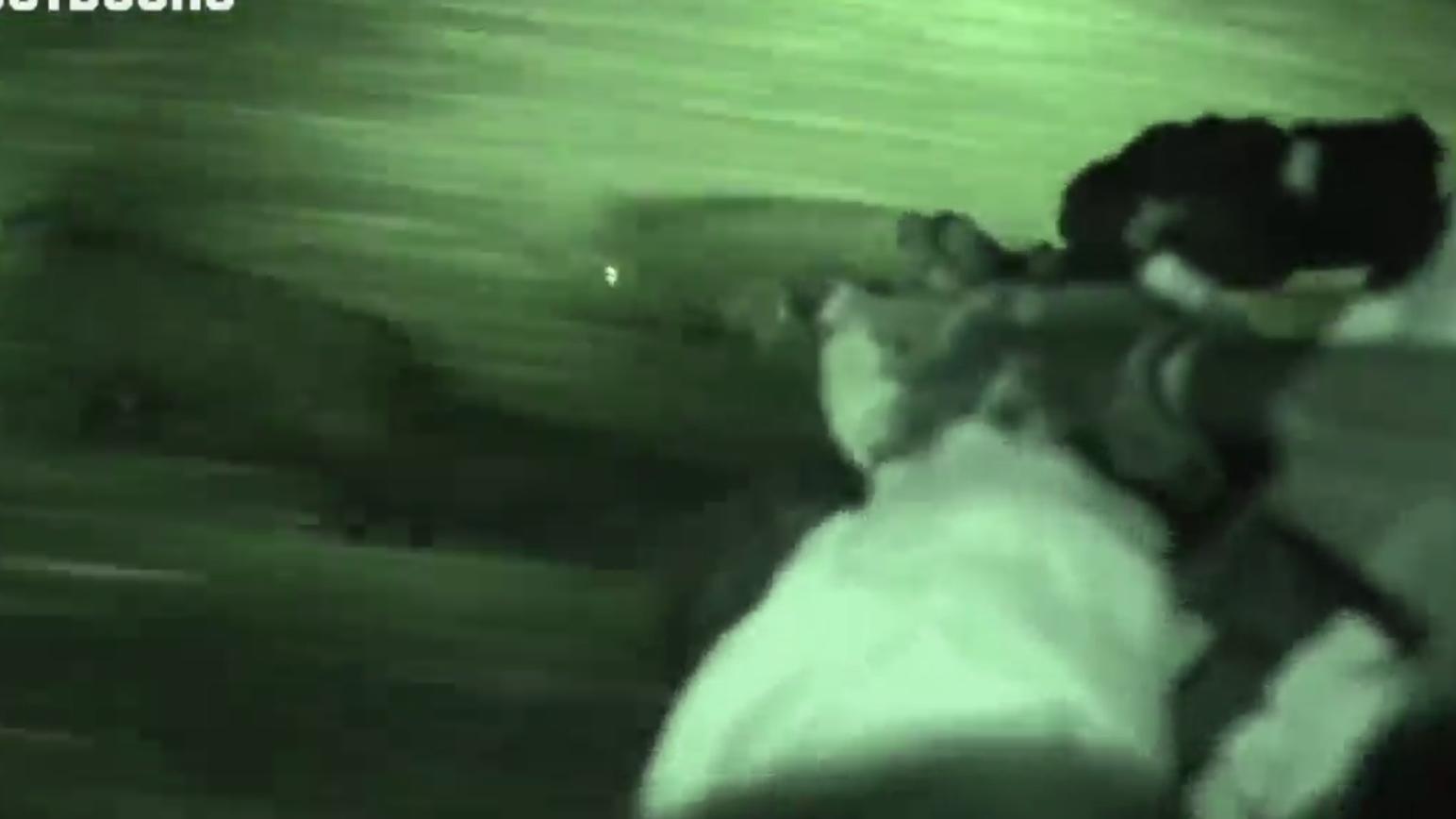 [野猪杀手] 战术骑兵队夜袭野猪群