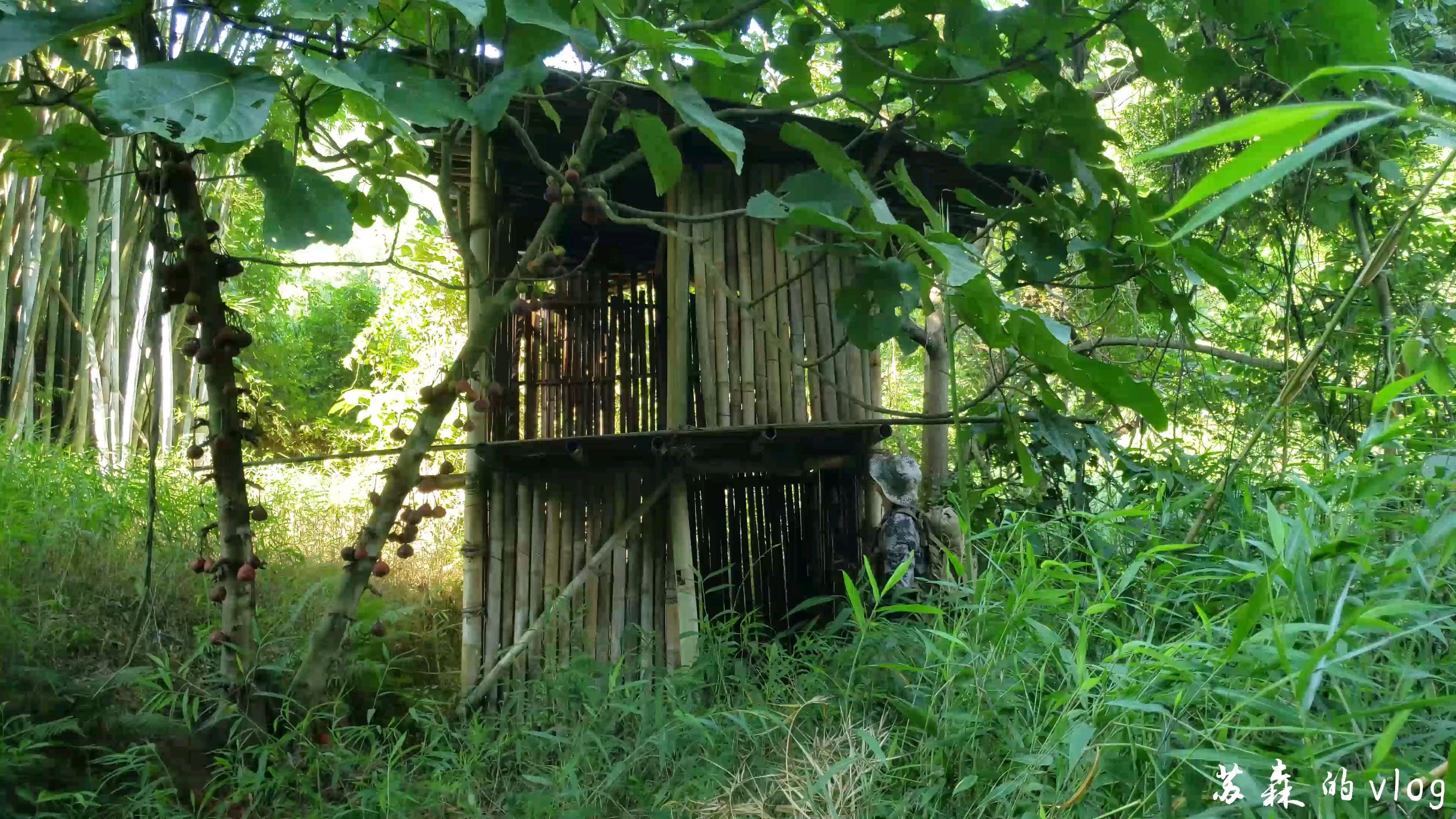 【AC独家】时隔两年,去看看以前盖的竹屋如何了