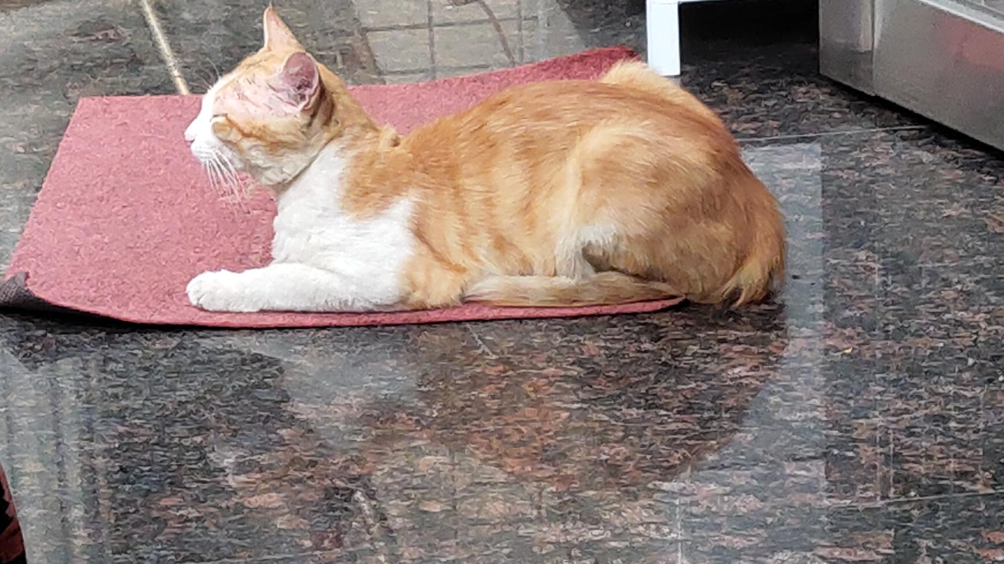 【白龙】看看猫咪在哪里