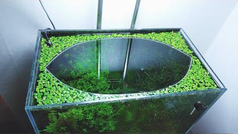 【生态缸】2018.10.11  生态缸建立一年了,现在正处于生机盎然的状态