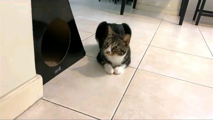 猫猫可是很记仇的哦