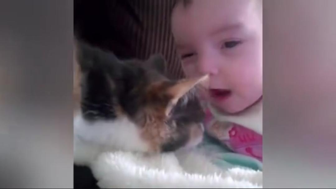 猫咪是如何和人类幼崽成为朋友的