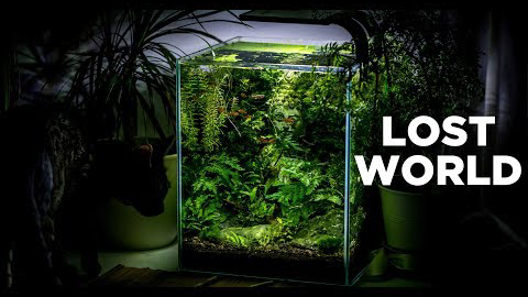 【生态缸】The ultimate nature aquarium for beginners