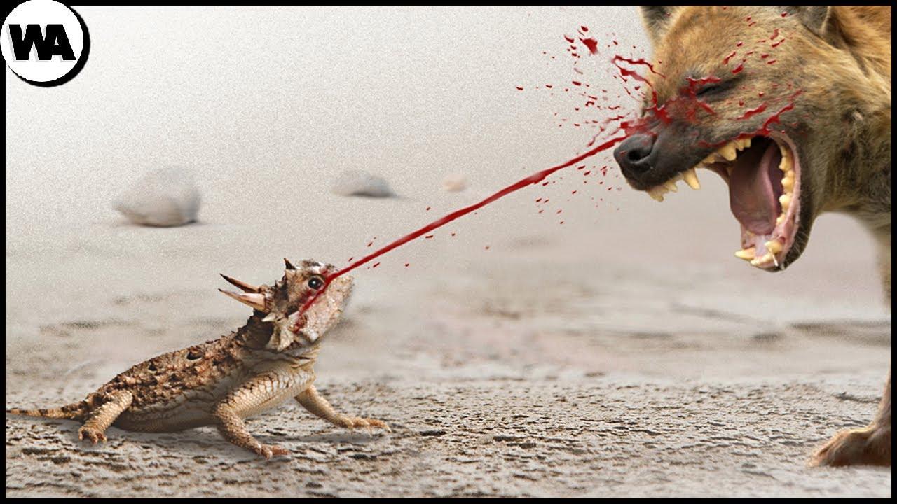 千万别惹这些动物,不然后果就跟这条狗一样!