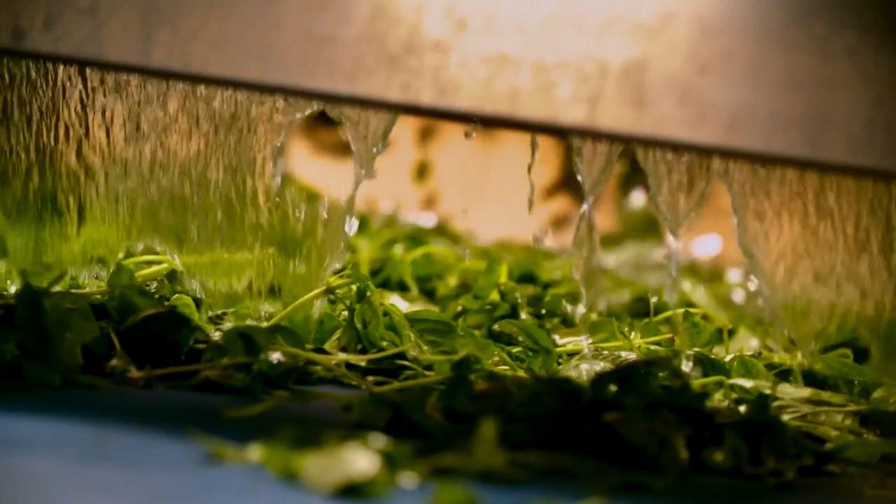 如何利用工业化迅速封印绿色带来的美味?不添加防腐剂的罗勒酱!