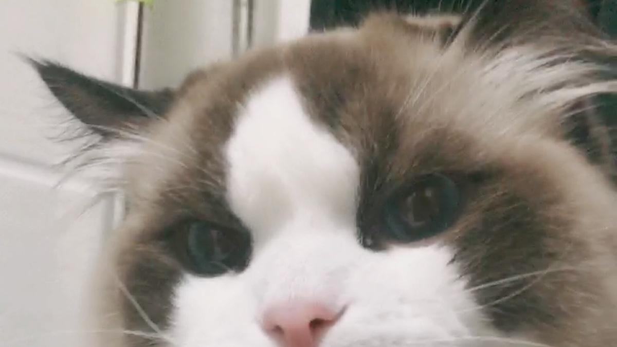 我家猫居然会握手???我不信!!!