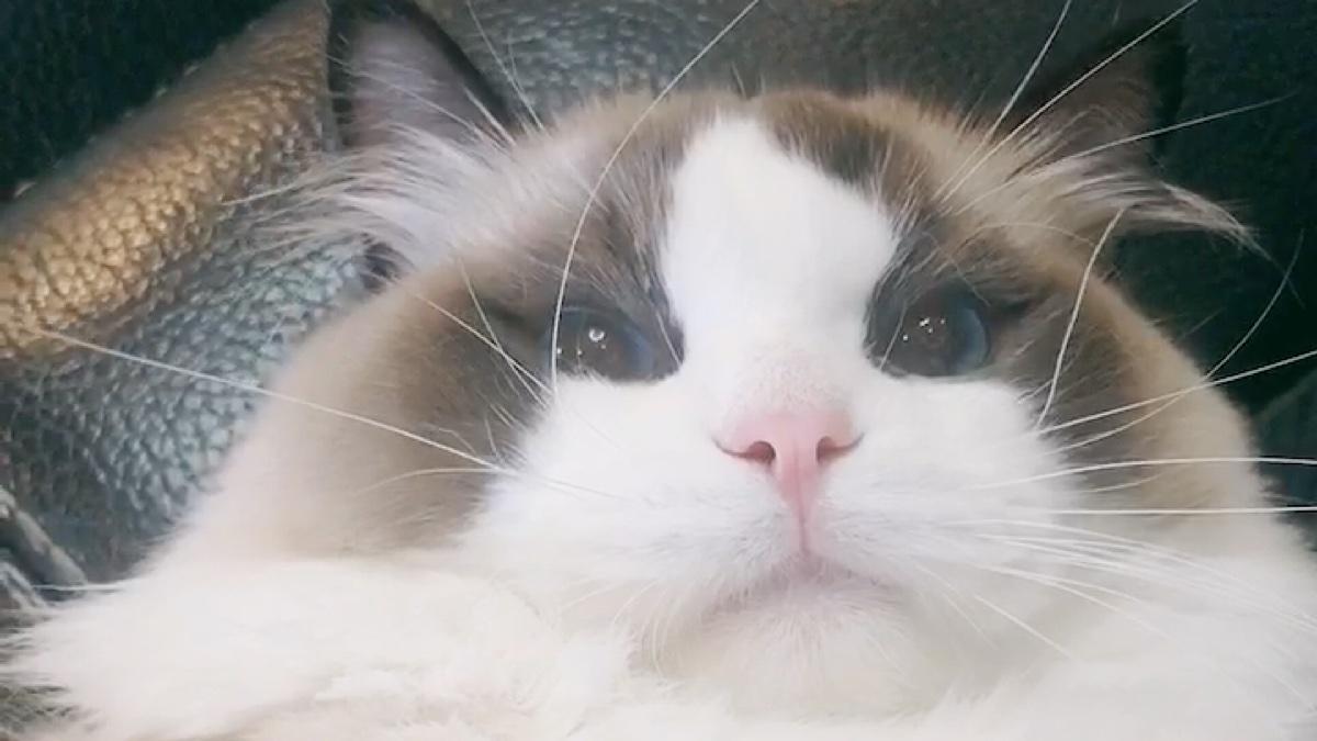 猫猫狂暴模式之我的主人疯了。