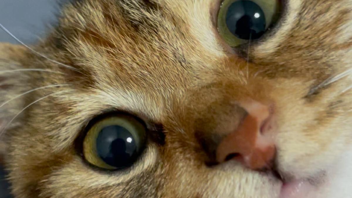 把小猫活活亲死的残忍视频