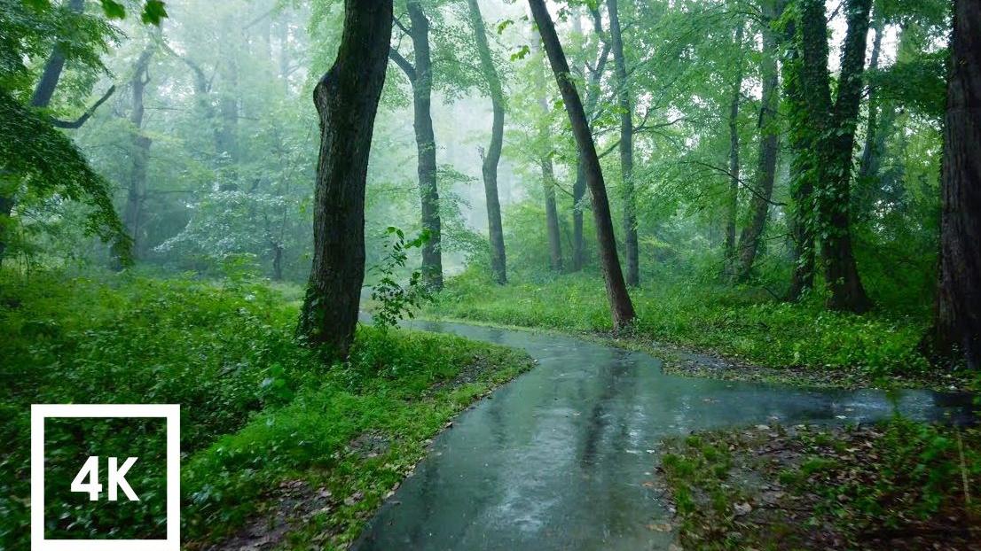 自然治愈 / 漫步在雨天的小树林里~催眠向