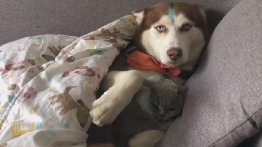 你这色狗,居然和猫猫睡觉
