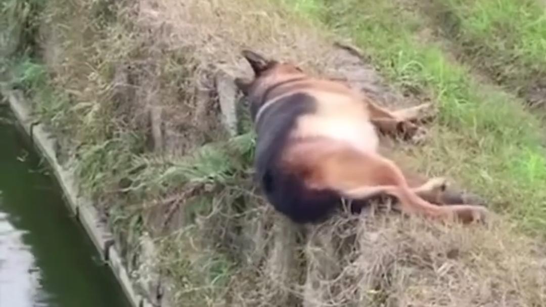 真·困成狗现场 你是一只狗,你想睡就睡呀!