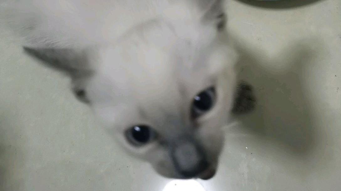 它叫队友。真是温柔粘人的宝宝!