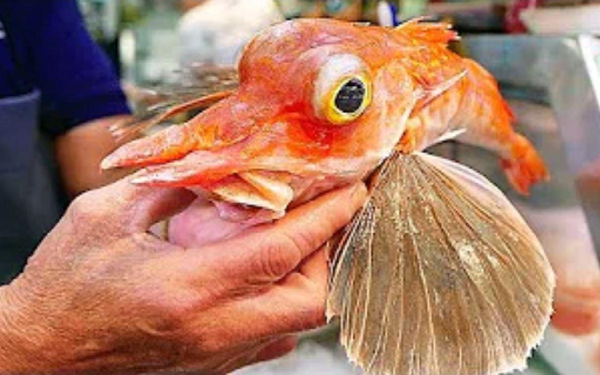 寿司大厨现场制作飞鱼刺身,惊艳的刀工让人赏心悦目