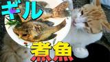 钓鱼+喂喵星人+烹饪【三合一】