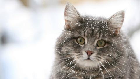 猫步走世界—苏格兰篇 中日双字[三角字幕组]