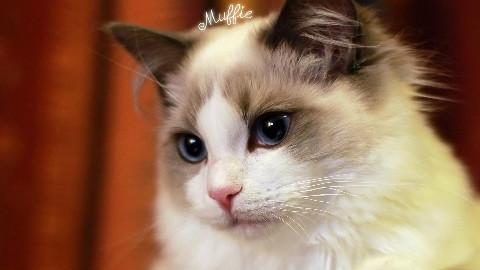 猫步走世界—马耳他篇 中日双字[三角字幕组]