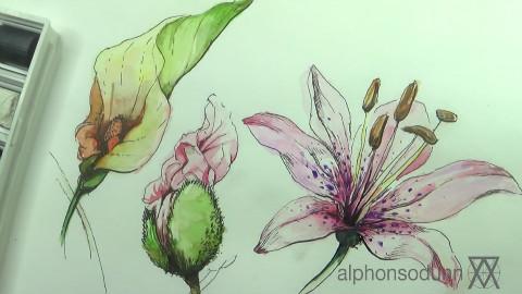 如何画好水彩花朵