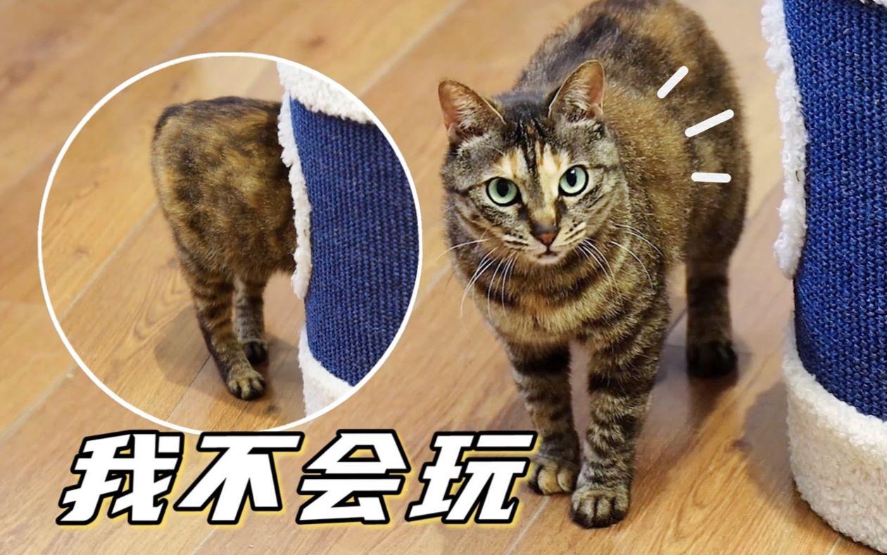 流浪猫第一次看到这么多猫玩具, 想玩又怯生生的样子让人看了心疼
