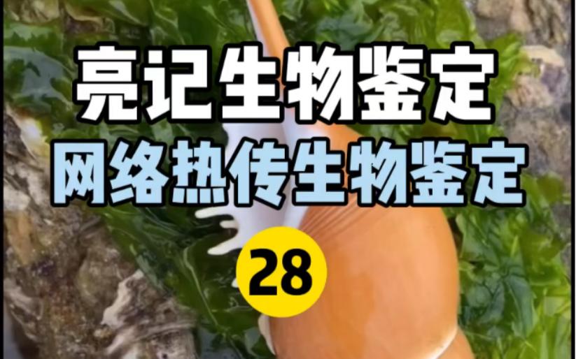 【亮记生物鉴定】网络热传生物鉴定28