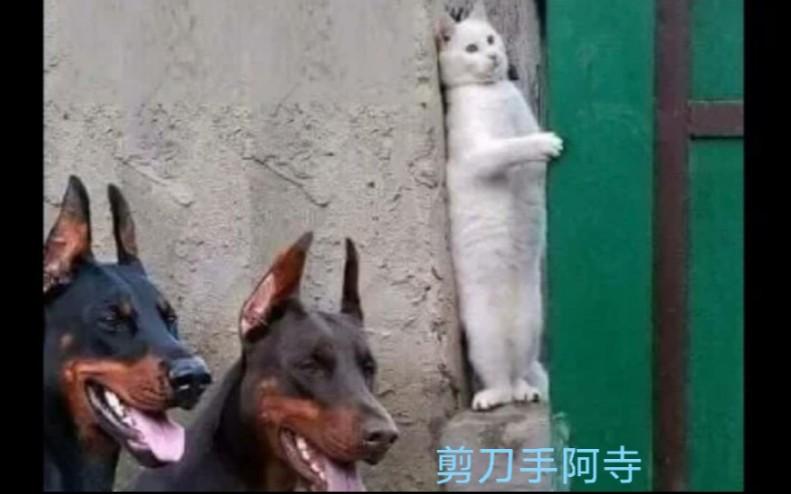 """""""沙雕动物迷惑行为大赏➌! ! """""""