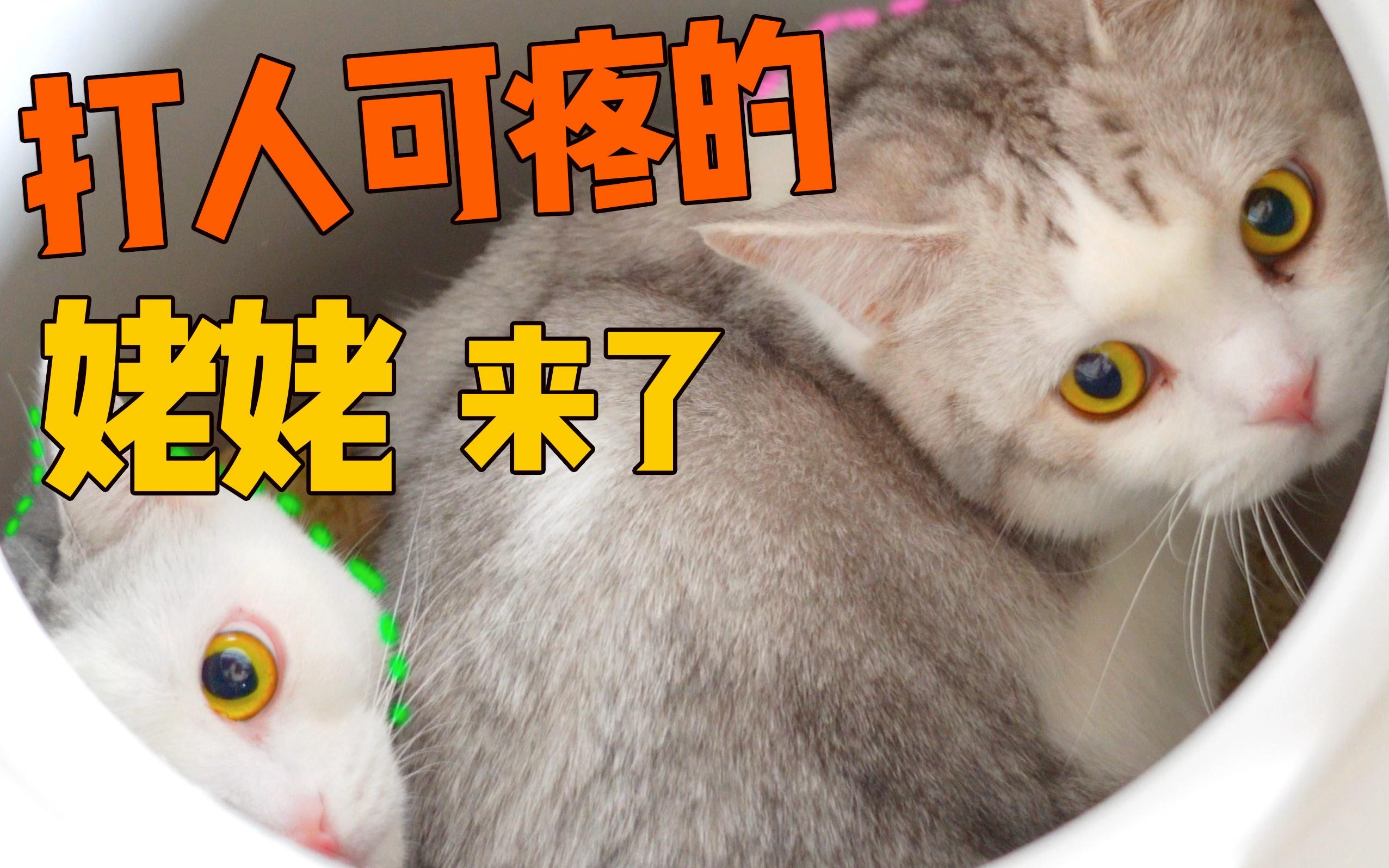 家里来了陌生两脚兽, 猫咪争先恐后藏进猫砂盆, 三天都没出来