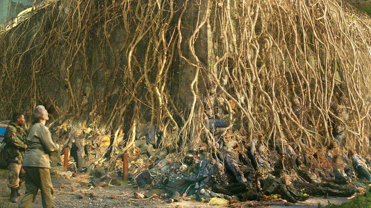 丧尸脑中长出真菌植物,聚成了参天大树,成熟后人类便会灭绝!