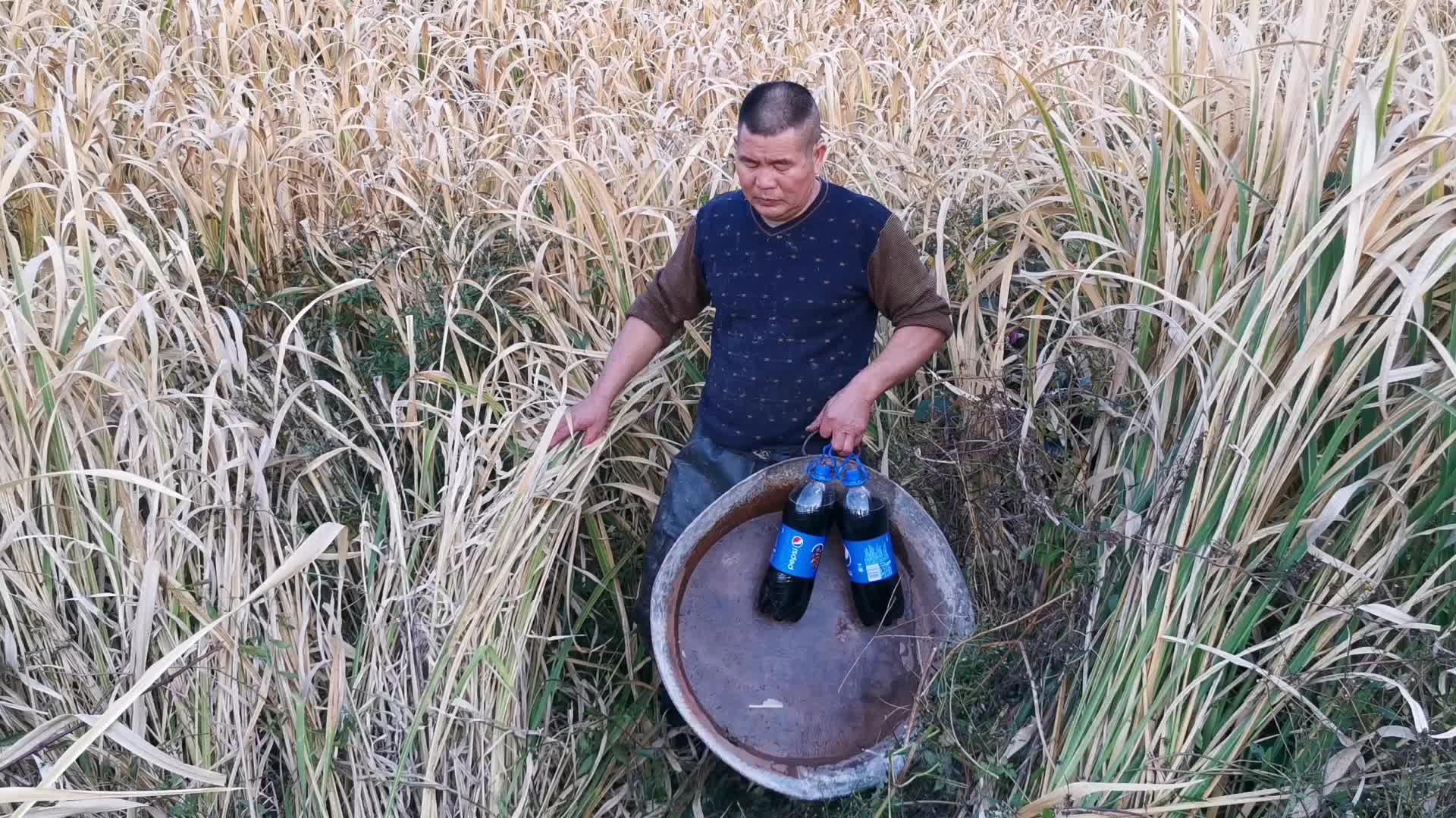 大叔去杂草丛生的鱼塘搞野, 发现一个洞把可乐灌下去, 抓6条鲶鱼