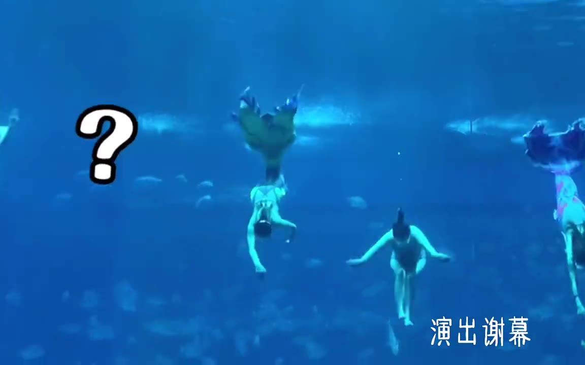 哈哈哈哈哈哈海洋馆表演谢幕少了个人,空出一个位置,一条鱼开心的混了进去
