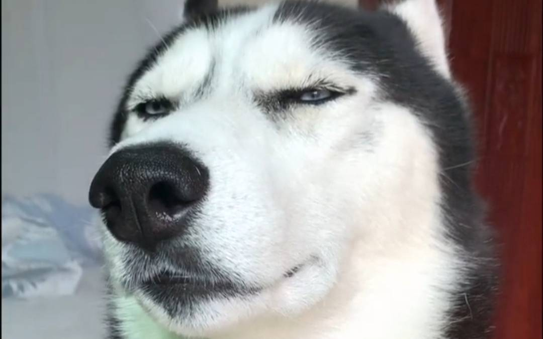 《狗起来了》